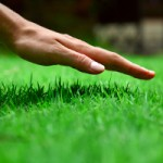 Huntsville Lawn Care Maintenance