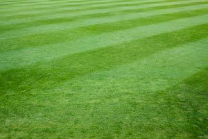 Huntsville Lawn Care Solutions